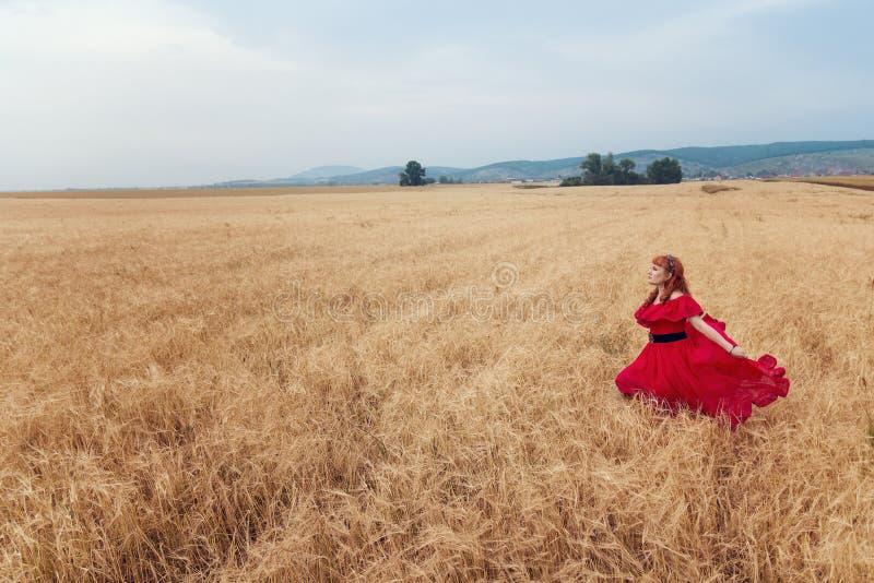 Vrouw in rode kleding die het gerstgebied doornemen stock foto's