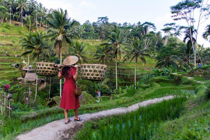 Vrouw in rood met manden in padievelden royalty-vrije stock afbeelding