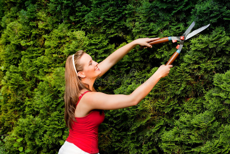 Vrouw in tuin in orde makende haag royalty-vrije stock afbeelding