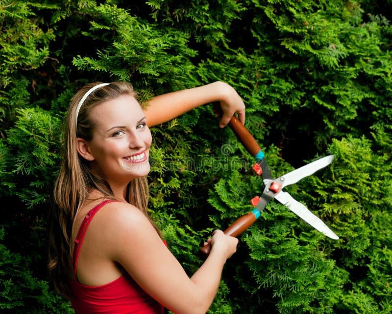 Vrouw in tuin in orde makende haag stock fotografie
