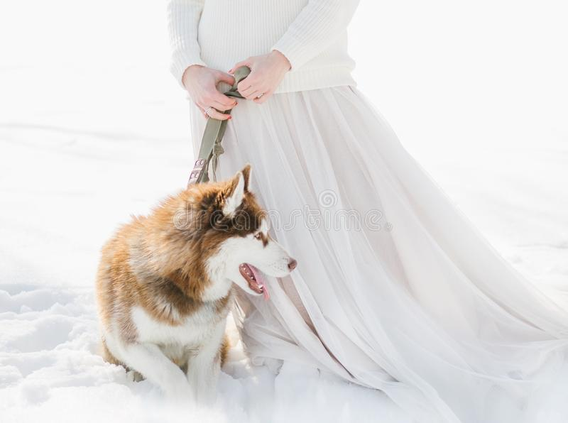 Vrouw twee de sneeuwbos van de honden schor winter royalty-vrije stock afbeeldingen