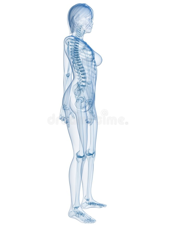 Vrouwelijk lichaam stock illustratie