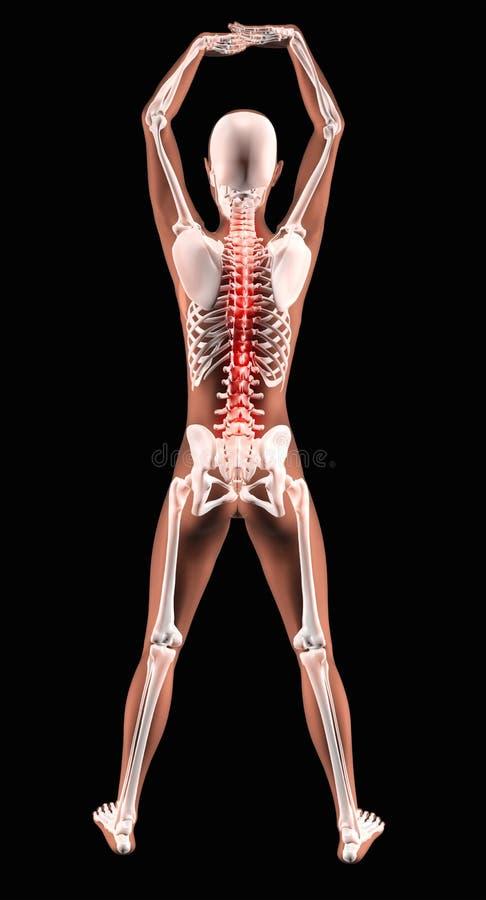 Vrouwelijk medisch skelet met benadrukte stekel royalty-vrije illustratie