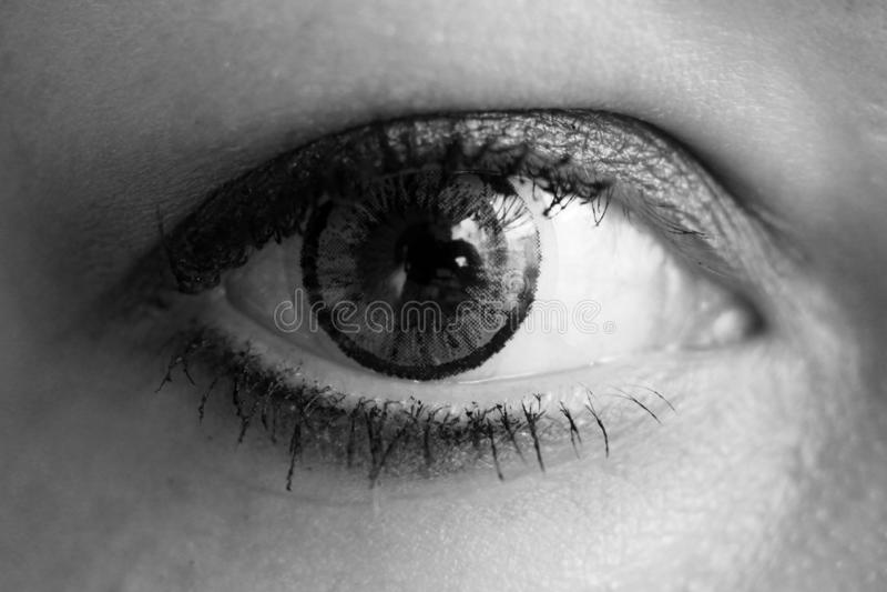 Vrouwelijk oog met grijze zo dicht contactlens stock afbeeldingen