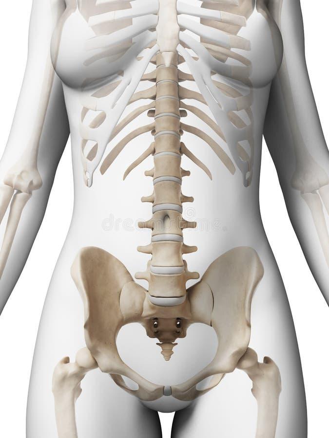 Vrouwelijk skelet vector illustratie