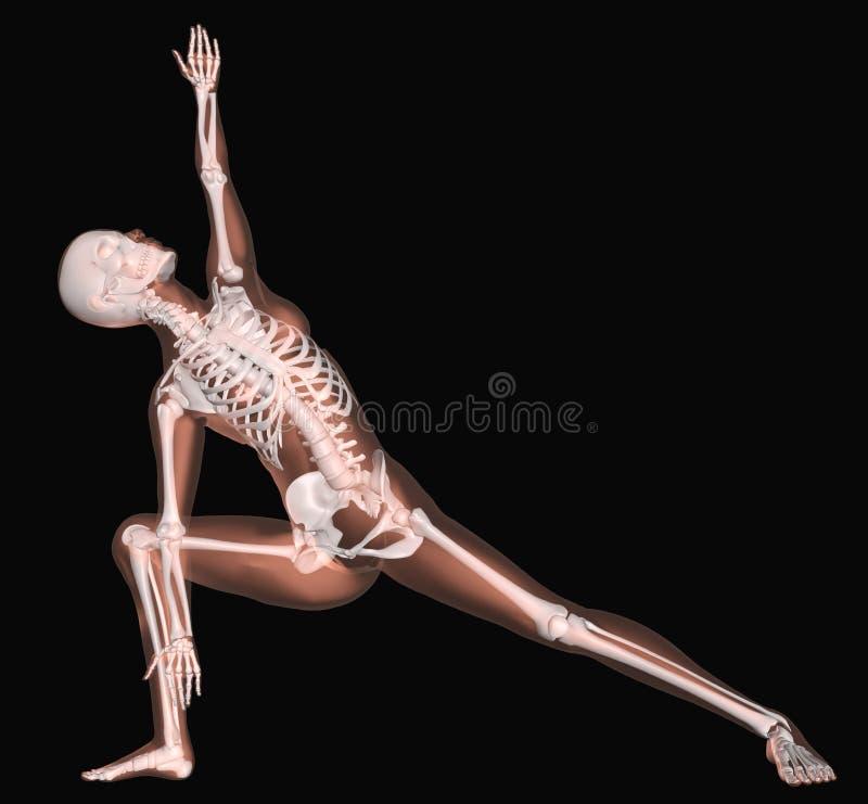 Vrouwelijk skelet in yogapositie royalty-vrije illustratie