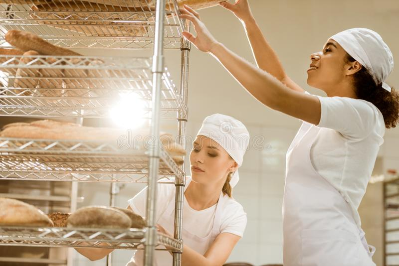 vrouwelijke bakkers die verse broodbroden op planken zetten stock afbeeldingen