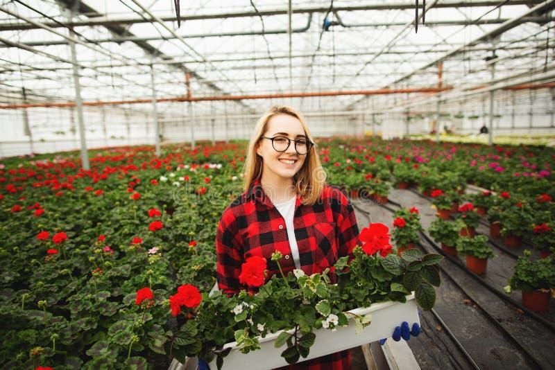 Vrouwelijke de bloempot van de bloemistholding in serre Concept het gardering royalty-vrije stock afbeelding