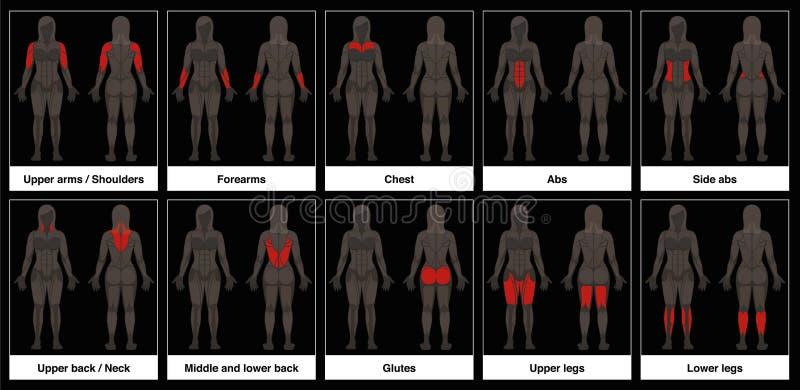 Vrouwelijke de Lichaamsdelen Zwarte Achtergrond van de spiergrafiek stock illustratie