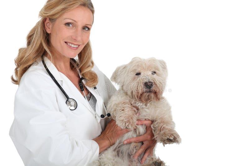 Vrouwelijke dierenarts die een hond houdt stock foto