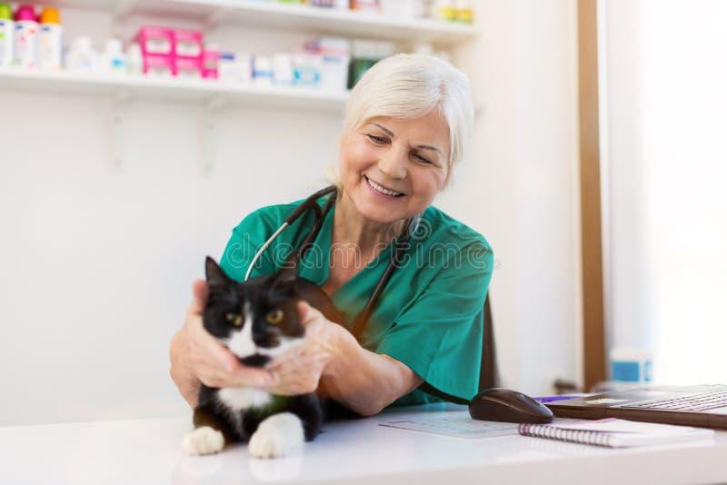 Vrouwelijke dierenarts die een kat in kliniek onderzoeken royalty-vrije stock afbeelding