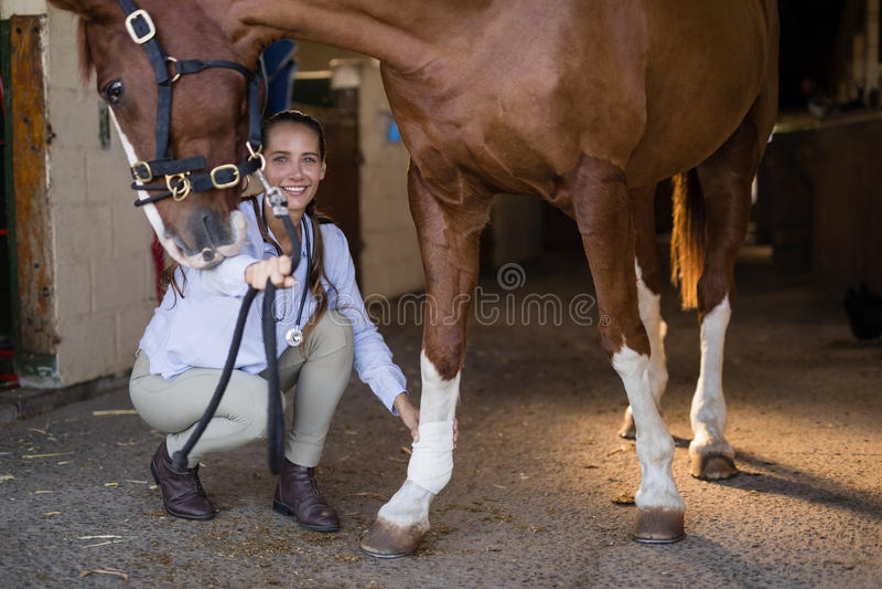 Vrouwelijke dierenarts die paard in stal onderzoeken stock fotografie