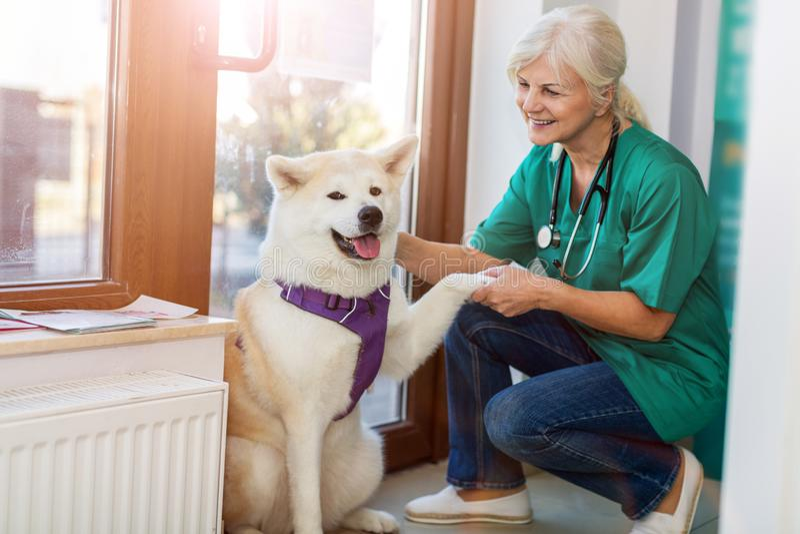 Vrouwelijke dierenarts met een hond royalty-vrije stock fotografie