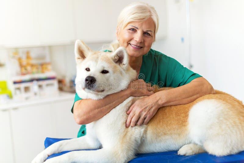 Vrouwelijke dierenarts met een hond royalty-vrije stock afbeeldingen
