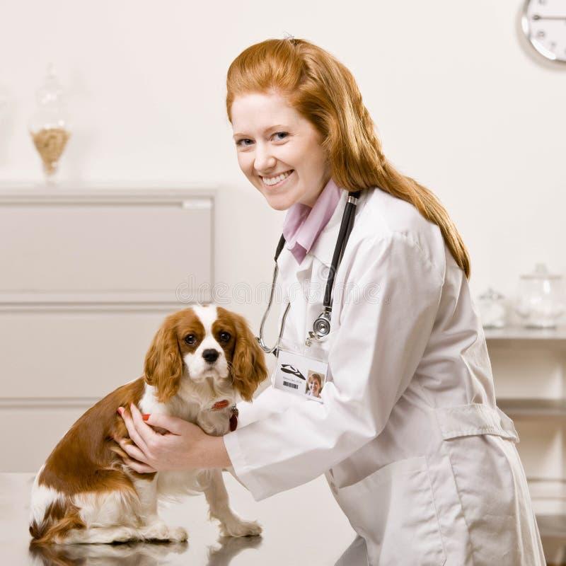 Vrouwelijke dierenartszorgen voor hond royalty-vrije stock foto's
