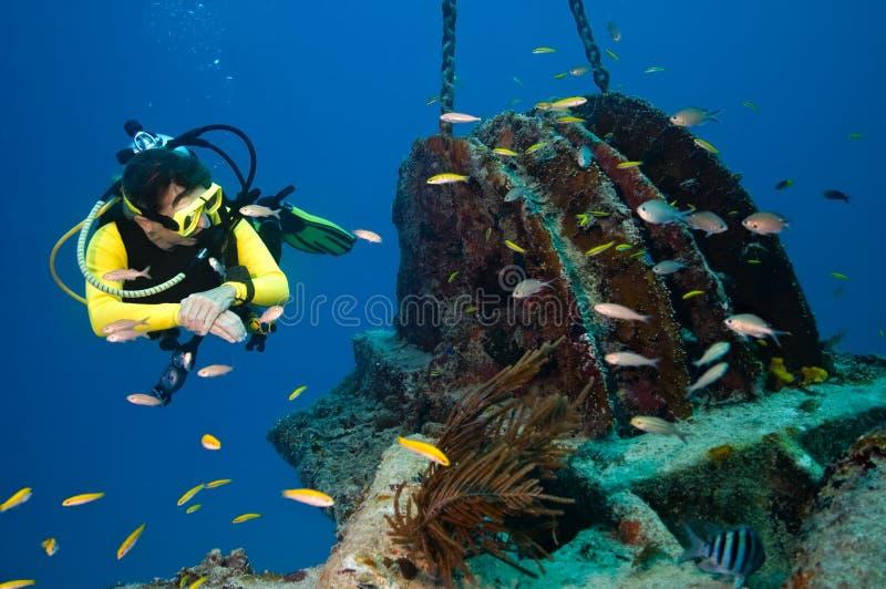 Vrouwelijke duiker die een wrak onderzoekt stock fotografie
