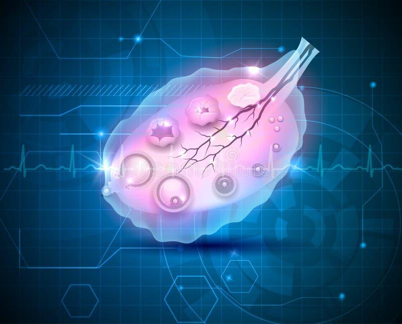 Vrouwelijke eierstok abstracte blauwe achtergrond vector illustratie