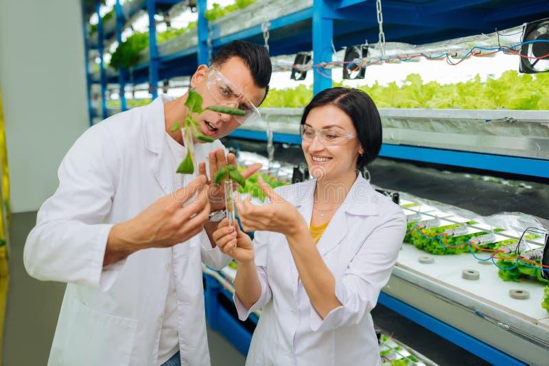 Vrouwelijke en mannelijke agronomen die eenvormige het planten greens dragen stock fotografie