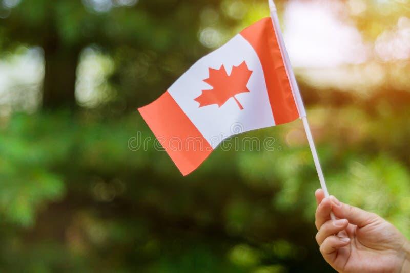 Vrouwelijke hand die Canadese vlag houden om de de Dagvakantie van Canada te vieren stock afbeeldingen