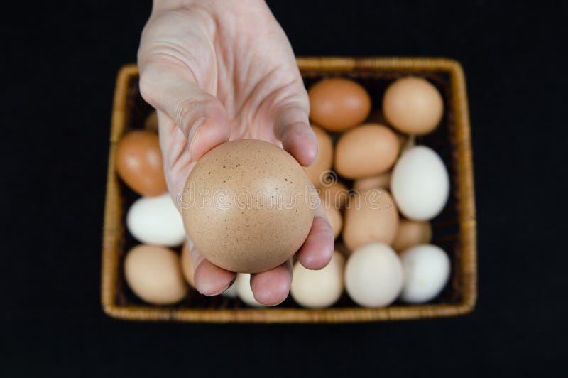 Vrouwelijke hand die een kippenei houden die uit een mand op een zwarte achtergrond wordt genomen royalty-vrije stock afbeelding