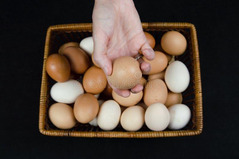 Vrouwelijke hand die een kippenei houden die uit een mand op een zwarte achtergrond wordt genomen stock fotografie