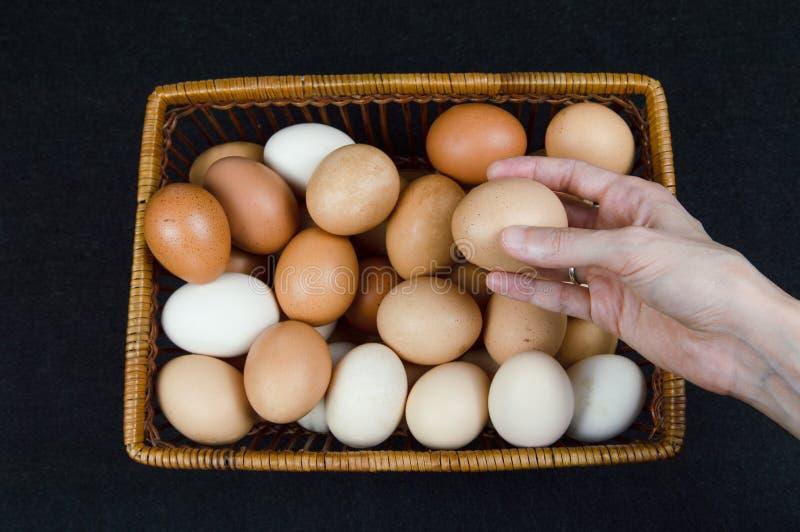 Vrouwelijke hand die een kippenei van een mand op een zwarte achtergrond nemen royalty-vrije stock afbeeldingen