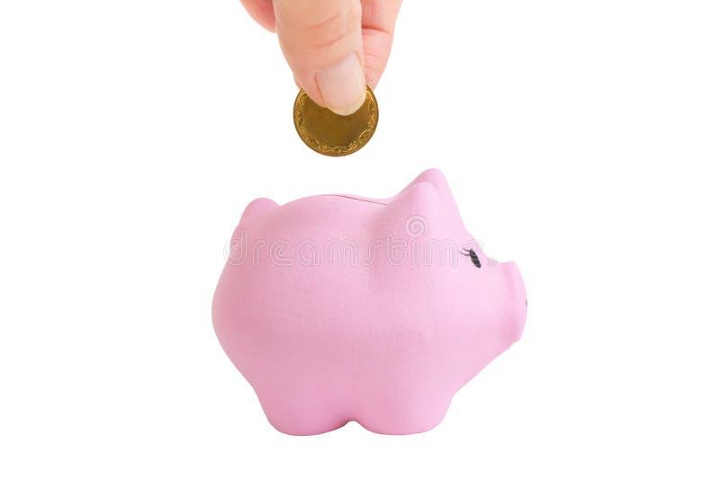 Vrouwelijke hand die een muntstuk zetten in spaarvarken op wit geïsoleerde achtergrond Roze piggibank royalty-vrije stock foto's