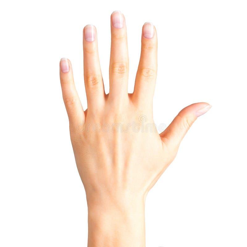 Vrouwelijke hand die vijf vingers en palm tonen royalty-vrije stock foto