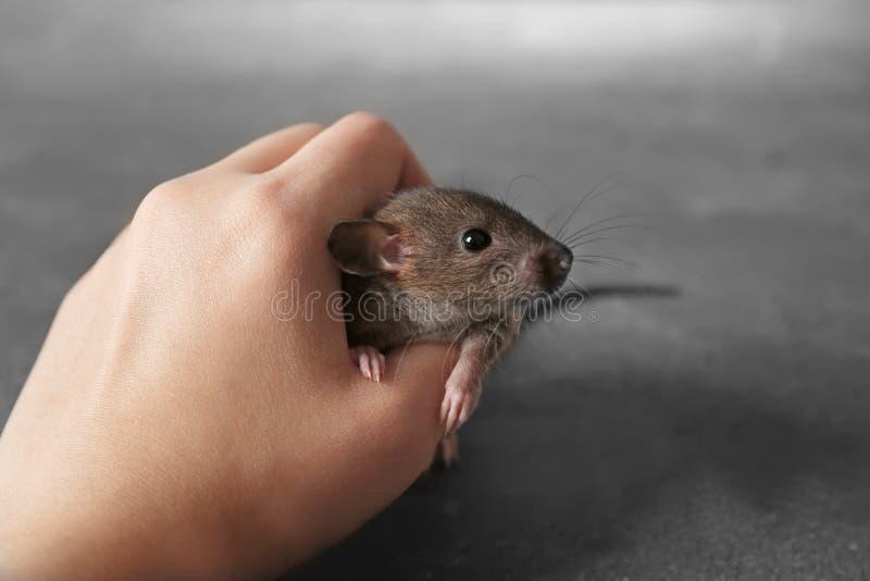 Vrouwelijke hand die weinig rat leuk houden royalty-vrije stock afbeeldingen