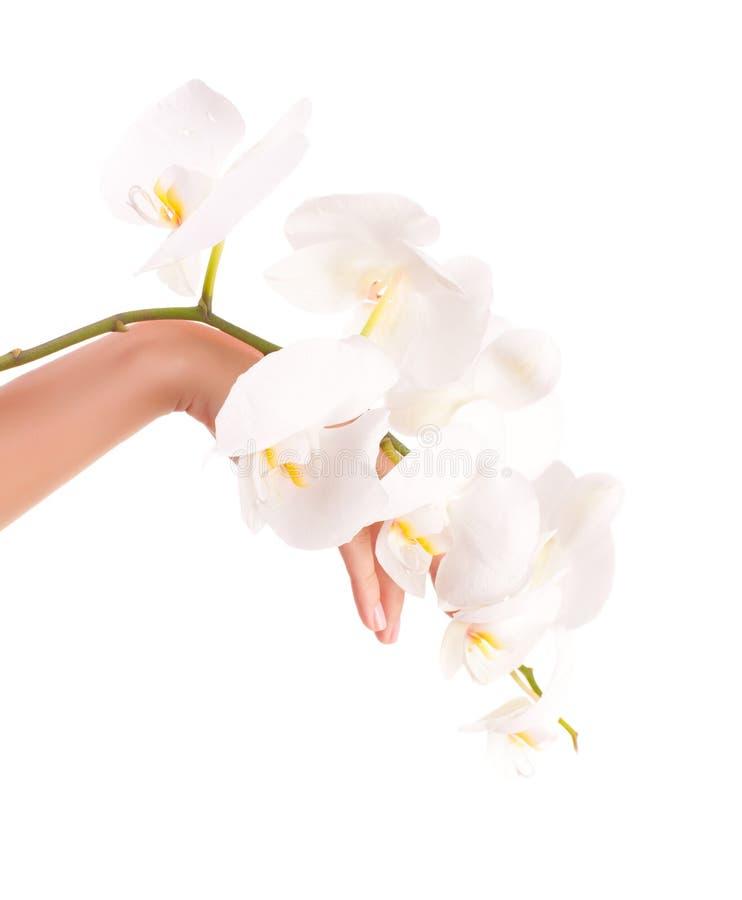 Vrouwelijke hand met orchideebloemen royalty-vrije stock afbeelding