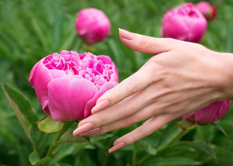 Download Vrouwelijke Hand Wat Betreft Pioenbloem Stock Afbeelding - Afbeelding bestaande uit nana, massage: 39103929