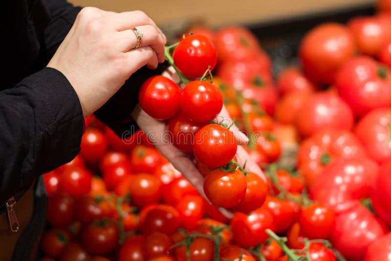 Vrouwelijke handen die tomaten in hun handen houden royalty-vrije stock foto