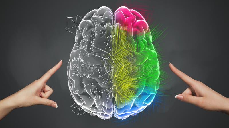 Vrouwelijke handen wat betreft Analytisch en Creatief deel van hersenen stock illustratie