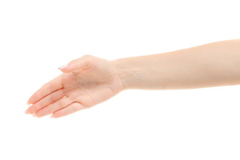 Vrouwelijke handhanddruk stock afbeeldingen