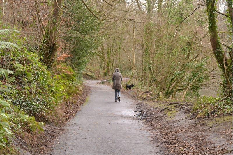 Vrouwelijke het lopen hond royalty-vrije stock fotografie