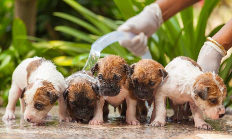 Download Vrouwelijke Het Puppyhond Van De Handwas Stock Foto - Afbeelding bestaande uit gelukkig, bruin: 39110854