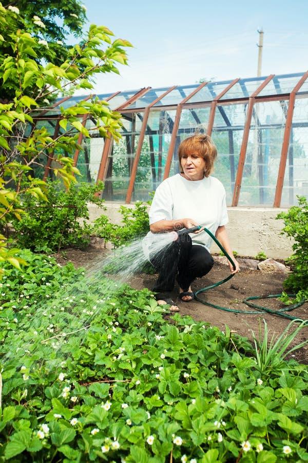 Vrouwelijke het water geven tuinbedden stock foto