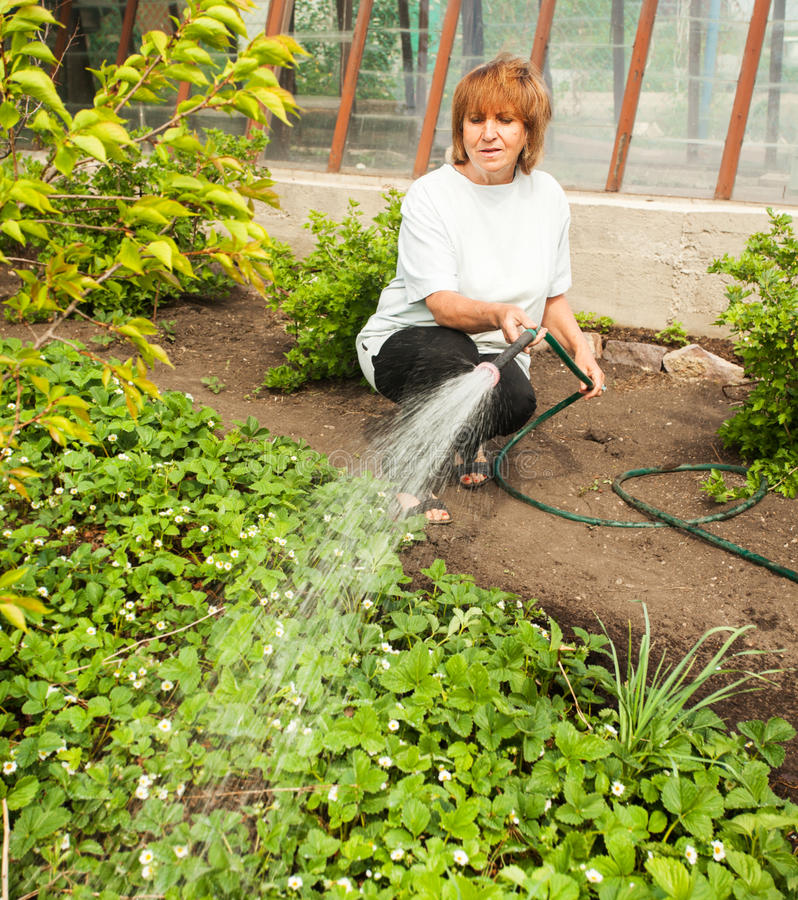 Vrouwelijke het water geven tuinbedden stock afbeelding