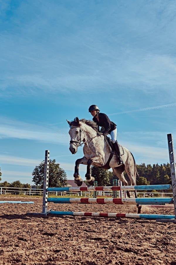 Vrouwelijke jockey op vlek grijs paard die over hindernis in de open arena springen royalty-vrije stock foto's