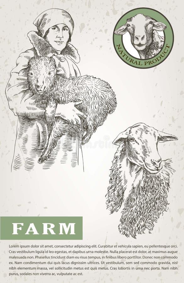 Vrouwelijke landbouwer die een lam in zijn handen houden vector illustratie