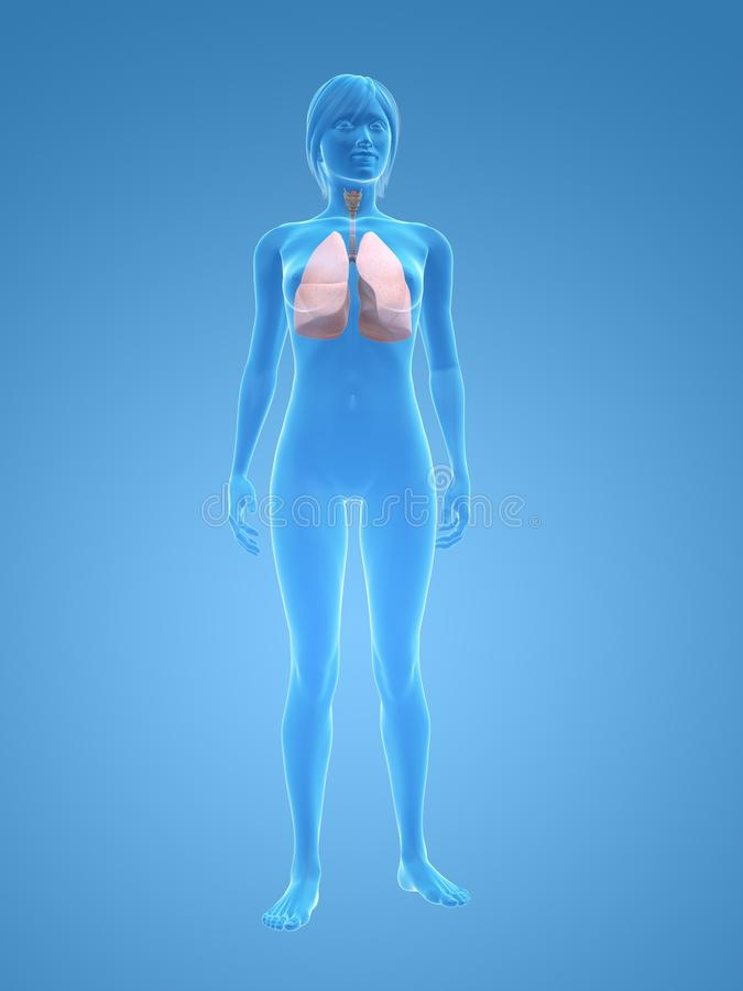 Vrouwelijke long stock illustratie