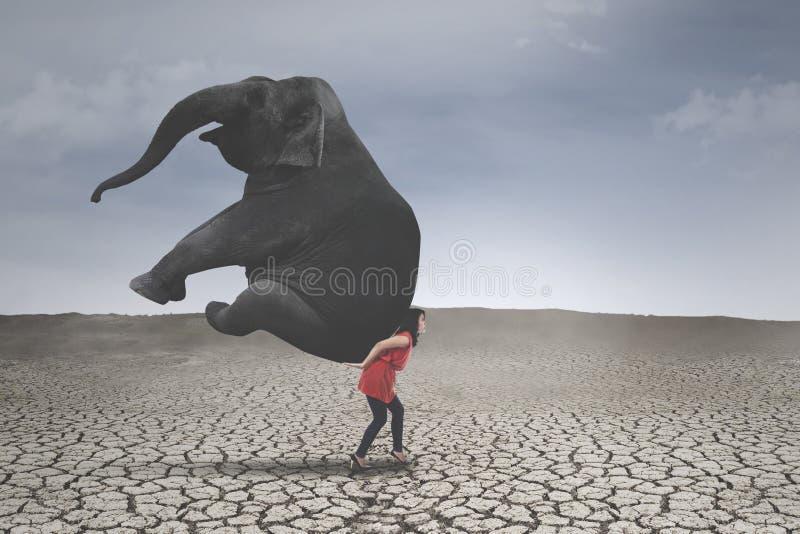 Vrouwelijke ondernemer met olifant op droge grond stock foto's