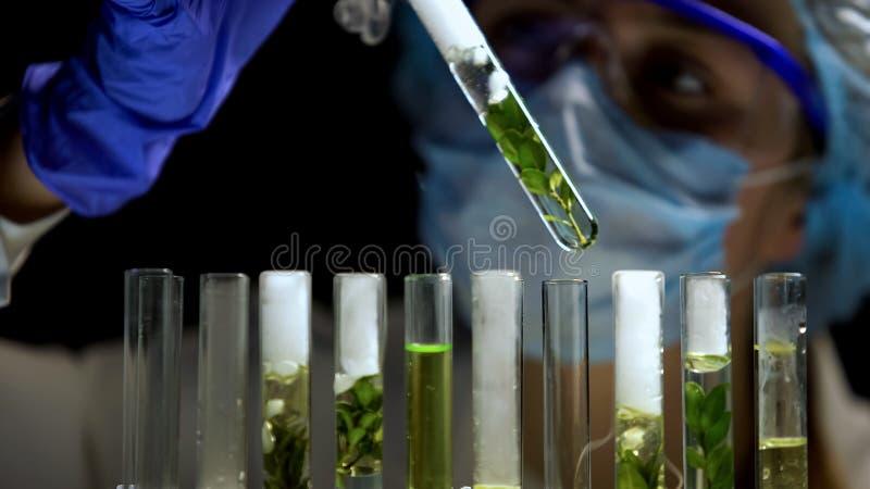 Vrouwelijke onderzoeker die testreactie, organische aromatherapy schoonheidsmiddelen analyseren, royalty-vrije stock afbeeldingen