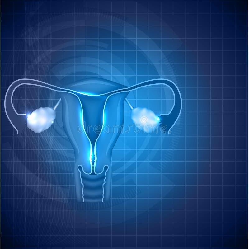 Vrouwelijke reproductieve systeemachtergrond vector illustratie