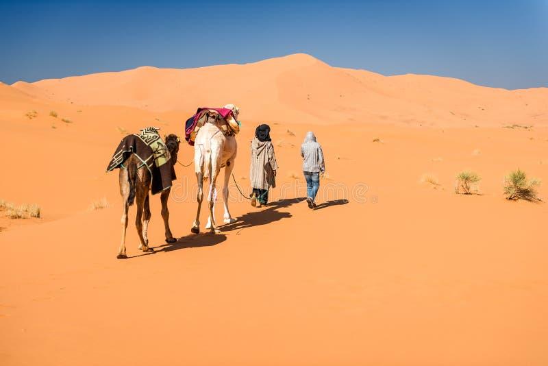 Vrouwelijke toerist en nomadische berber die 2 kamelen leiden door woestijn royalty-vrije stock foto's