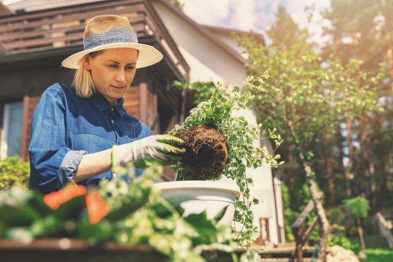 vrouwelijke tuinman die bloemen in bloempot planten stock fotografie