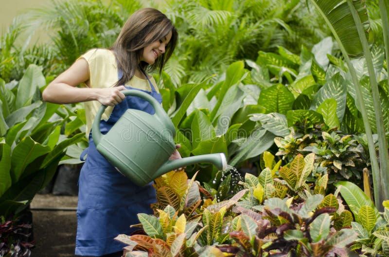 Vrouwelijke tuinman het water geven installaties royalty-vrije stock foto