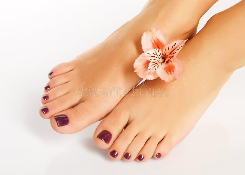 Vrouwelijke voeten met mooie pedicure na kuuroordprocedure stock foto