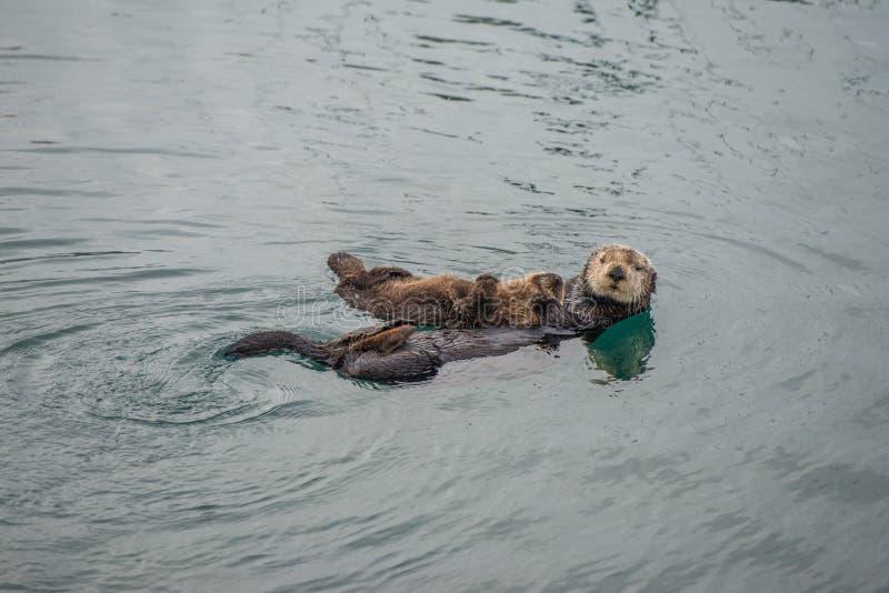 Vrouwelijke volwassen overzeese otter met baby stock foto