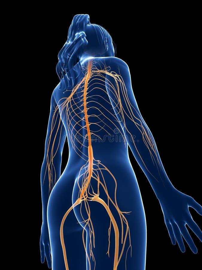 Vrouwelijke zenuwen vector illustratie